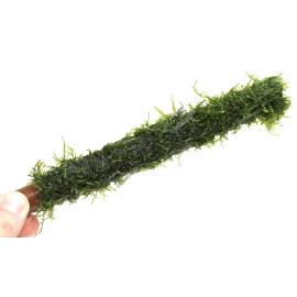 Bambou Stick