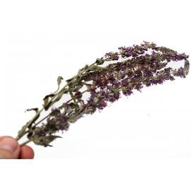 2-3 Fleurs de Salicaires