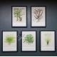 "Tropica ""Art Postercards""  13x18cm (5pcs) Selection incl. Cyperus"