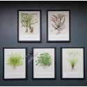 "Tropica ""Art Cards""  13x18cm (5pcs) Selection incl. Cyperus"