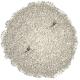 Sable pour Crevettes Dennerle - Blanc Sunda 2kg