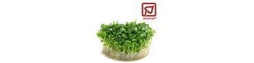 Substrat Plantes