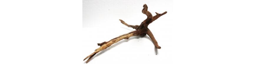 Nano Roots