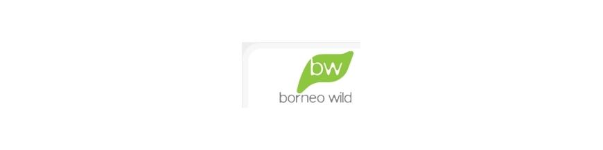 BornéoWild